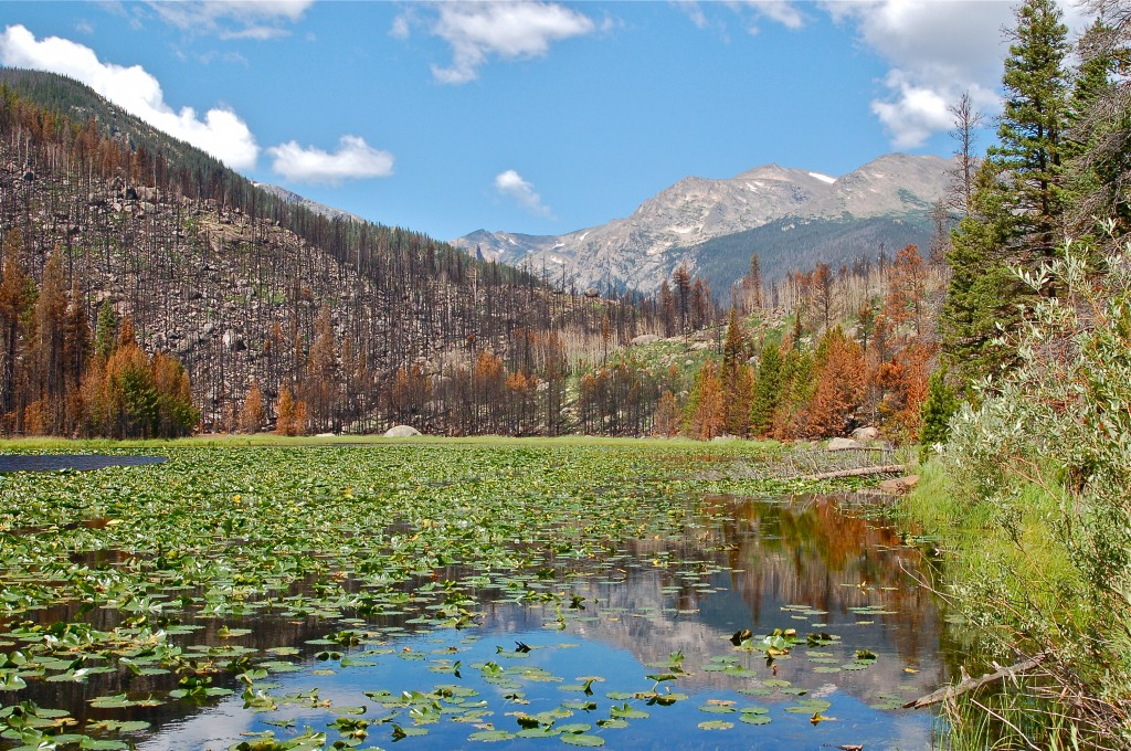 Cub Lake in RMNP. Pine beetle killed trees aided the Fern Lake Fire of Oct 2012.