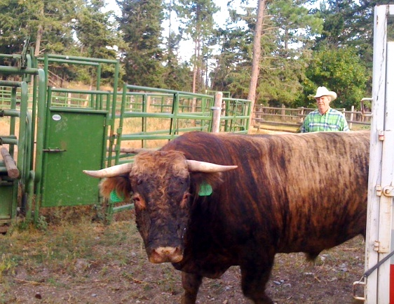 Ed Jonas tending to his cattle. Courtesy of Blacktail Mountain Ranch.