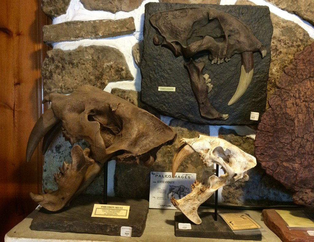 You can never go wrong with a Smilodon, aka saber-toothed cat. At Dinosaur Ridge.