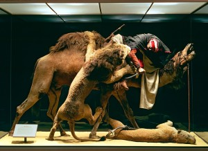 The Arab Courier. Photo courtesy of the Carnegie Museum of Natural History.